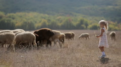 Carefree little girl throws meal to sheep grazing in the meadow Stock Footage