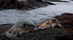 Snoozing Sea Turtles Stock Footage