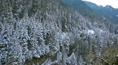 Panning Movie of Snow Covered Evergreen Trees along Hiking Trails on Mountain Stock Footage