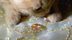 Kitten is playing with wedding rings. playful cat on bed. home pets Stock Footage