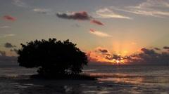 Black Mangrove at sunrise Stock Footage