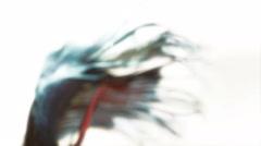 Fish, Betta, Siamese Fighting Fish, Aquarium, 4K, UHD - stock footage