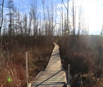 Autumn marsh windy with boardwalk and people Stock Footage