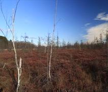 autumn marsh bare trees - stock footage