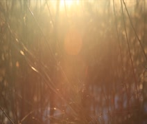Sun drenched autumn grass close up 1 Stock Footage