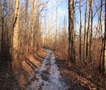 autumn trail dappled in sun with snow 1 - stock footage