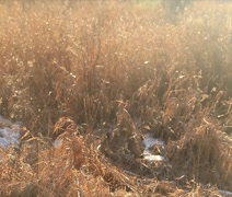 Sun drenched autumn grass Stock Footage