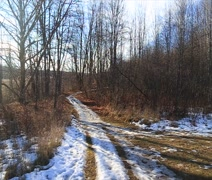 Autumn trail with snow Stock Footage