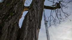 Sliding from behind a tree showing antenna Stock Footage