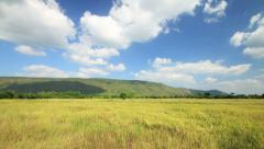 Golden paddy rice field, Mountain and Cloud running background, time lapse clip. Stock Footage