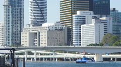 City cat with Brisbane city in background 4K Stock Footage