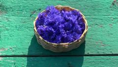 Fresh medical cornflower blossoms in basket on garden table Stock Footage