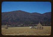 [Cornshocks in mountain farm along the Skyline Drive in Virginia] Stock Photos