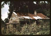 An old house almost hidden by sunflowers, Rodney, Miss. Stock Photos