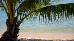 Tropical Beach with Palm and Sea - Vacation and Peace Stock Footage