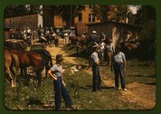 Mountaineers and farmers trading mules and horses on