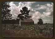 A Negro church in a corn field, Manning, S.C. Stock Photos
