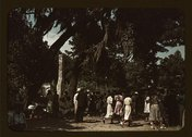 Fourth of July picnic by a group of Negroes, St. Helena Island, S.C. Stock Photos