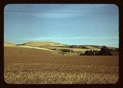 Wheat farm, Walla Walla, Washington Stock Photos