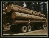 Truck load of ponderosa pine, Edward Hines Lumber Co Stock Photos