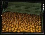 Washing oranges at an orange packing co-op, Redlands, Calif. Santa Fe R.R. trip Stock Photos