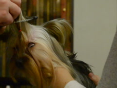Hairdress on the head. Related clips are in my portfolio in 1920x1080. - stock footage