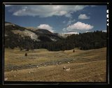 Bands of sheep on the Gravelly Range at the foot of Black Butte, Madison Coun Stock Photos