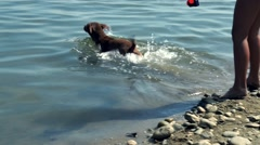 Dog swimming into the water Stock Footage