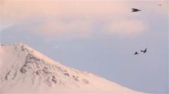 Sea birds coasting, gliding, on wind over bridge near Grundarfjordur, Iceland Stock Footage