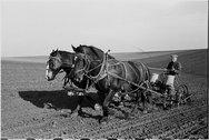 [Corn planting, Jasper County, Iowa] Stock Photos