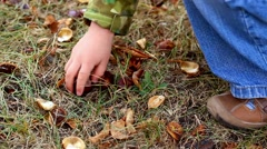 Cute 4 year old little boy picking up chestnuts in park Stock Footage