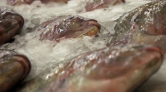 Fresh Fish on Ice Decorated for Sale at Market Stock Footage