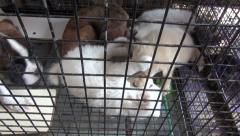 Beautiful dogy playing in cage, Mumbai market, India Stock Footage