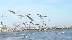 A flock of seagulls fly low along the beach super slow motion - stock footage