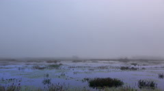 Pan across Fog over swamp just before sunrise Stock Footage