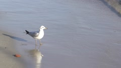 Seagull flies from the beach in slow motion Arkistovideo