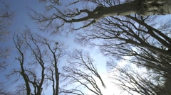Huge trees without leaves with blue sky background Stock Footage