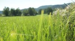 Grassland part 21 of 23 - stock footage