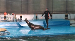 Show in the dolphinarium with a fur-seal - stock footage