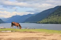 A horse grazes ashore lake. - stock photo