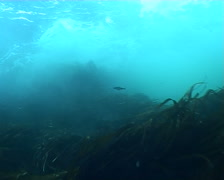 Norway underwater sea diving video Stock Footage