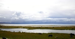 4k clouds mass rolling over Tibet lake namtso,herdsman tent,a group of cow. Stock Footage