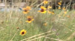 Wildflowers pull to Huey gunship Stock Footage