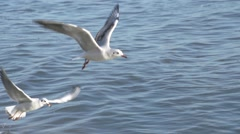Two seagulls fly over sea in close up in slow motion - stock footage