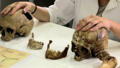 Woman forensic scientist showing human skulls - stock footage