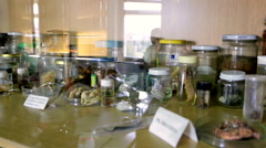 Laboratory samples of animals and plants in jar Stock Footage