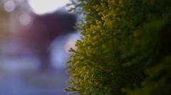 Green bush cluseup in urban area - stock footage