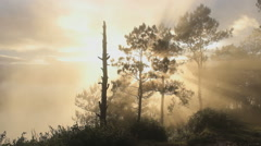 Golden sunrise in the jungle with misty mountains Stock Footage