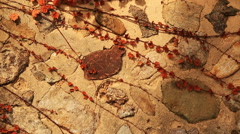 Ivy leaves on traditional korean wall with various stone Stock Footage