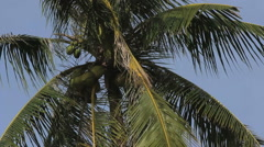 Palm tree waving in the wind Stock Footage
